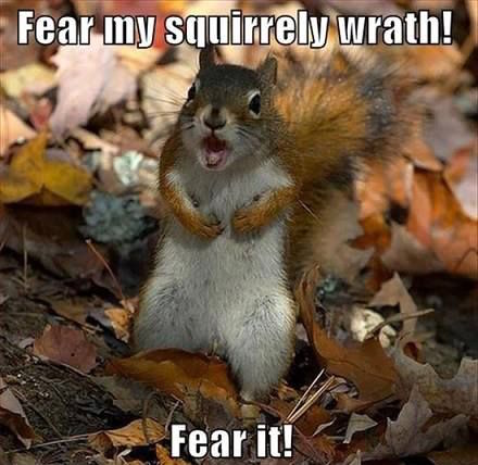 Squirrel-Wrath.jpg
