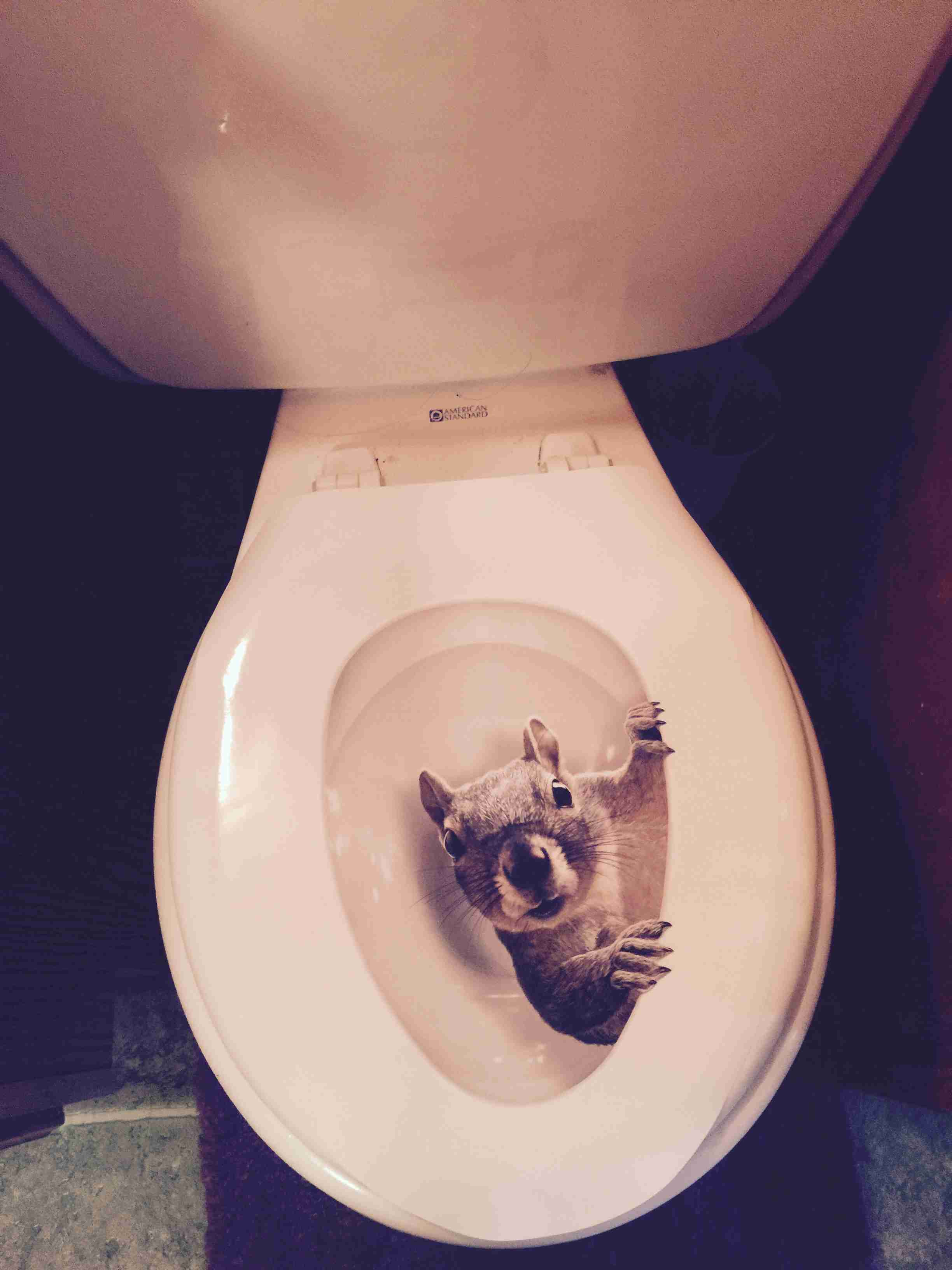 Cool toilet seat covers - Squirrel In The Toilet
