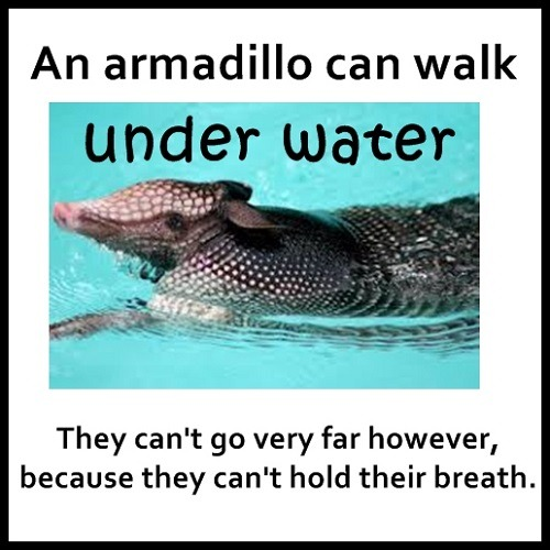 Tim Gard Meme - Armadillo's under water
