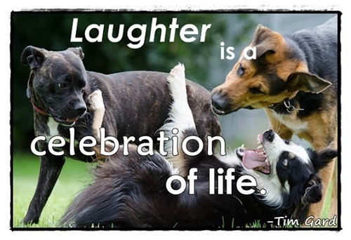 Tim Gard Monday Motivation Meme - Laughter