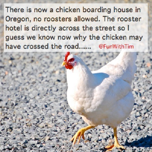 Tim Gard Meme Chicken Boarding House