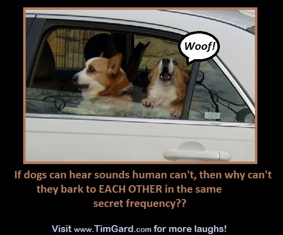 Tim Gard Meme - dogs bark