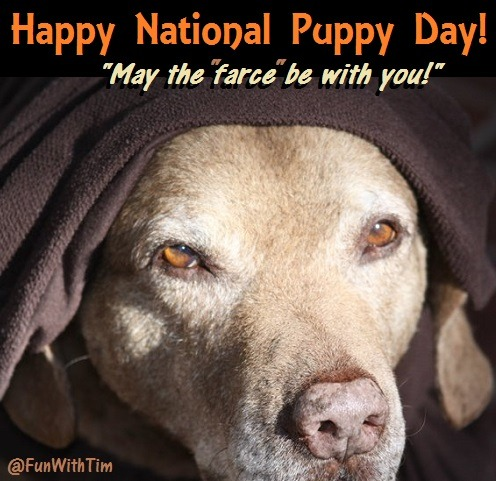 Tim Gard Meme - National Puppy Day